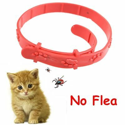 Insecticidal Anti Flea Pet Cat Collar Adjustable Mosquitoes Dog Ring Neck Straps
