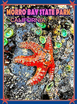 Morro Bay Park Tidepool California United States Travel Advertisement Poster