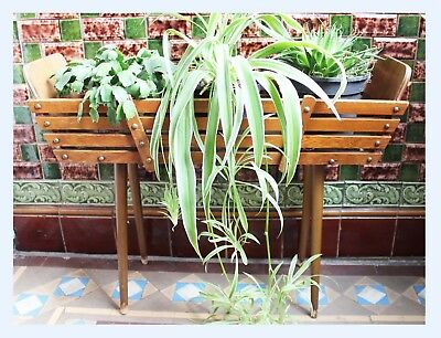 Vintage Mid Century Large Wooden Plant Holder Trough Hall Stand Scandi Display