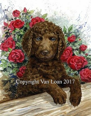 Framed Irish Water Spaniel watercolor puppy in roses
