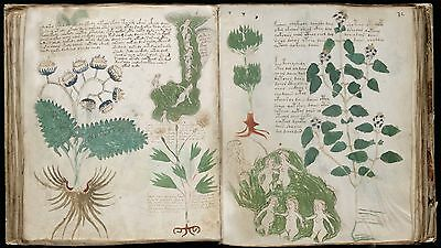 The Voynich Manuscript - Illustrated Mystery Medieval Book, Secret Code - On Dvd