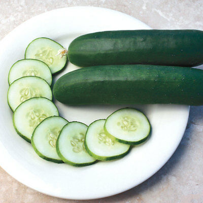 Greek Cucumber 25 seeds Organic Non GMO Vegetable