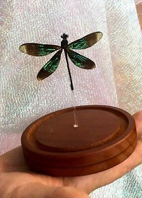 "H-23  Iridescent Wing Dragonfly Odonates Spread "" Glass Dome Display specimen"