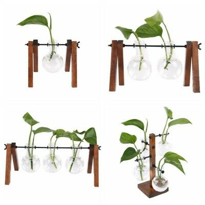 AU Creative- Plant Terrarium with Wooden Stand Glass Vase Holder For Home Decor