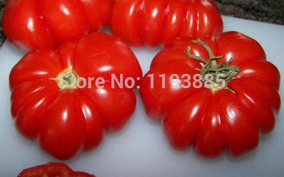 Rare Costoluto Genovese Folding Tomato Seeds Tomatoes Heirloom Vegetable 200pcs
