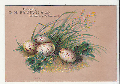 D H Brigham & Co Springfield Clothiers White Speckled Eggs Vict Card c 1880s