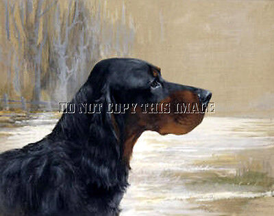 Beautiful Reproduction 8X10 Photographic Print Head Study Of A Gordon Setter