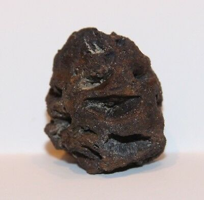 Meta Sequoia Pine Cone - Hell Creek Formation CRETACEOUS Dinosaur Age Fossil