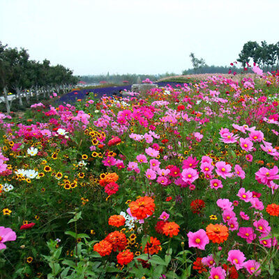 500 pcs Wildflower 'Drought-tolerant Mixed' flower seeds #W02