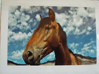 wild horse greeting cards set of 3