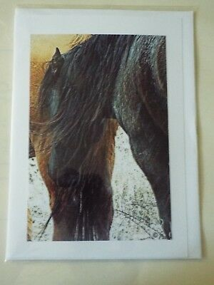 greeting cards set of 8 wild horses