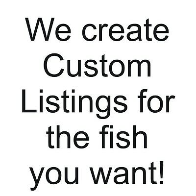 A special listing for another African Cichlid lover, ldav5655