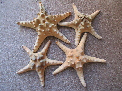 4 Natural large Starfish Sea Shells,. Craft, display,Bathroom Etc