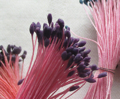 Vintage Millinery Stamens Dbl. Pink Stems Purple Tips  French