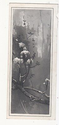 BLack & White Branches in Forest No Advertising Vict Card c1880s