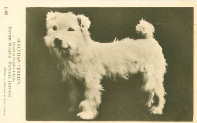 Old RARE Sepia Sealyham Terrier Dog Postcard England Waterlow & Sons Ltd c1920