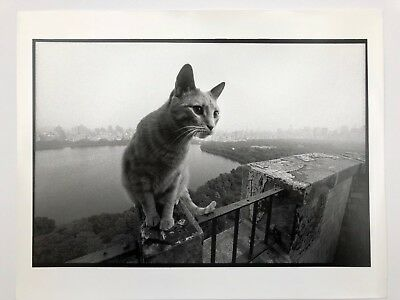 "Bruce Davidson Fine Art Photograph. Cat Image from ""Central Park"" series.11x14."