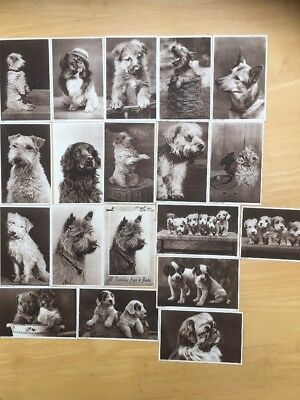 19 x Antique Vintage Postcards Of Dogs