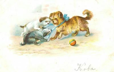 Rare Old Dog Postcard Norfolk Jack Russell Terrier Puppy Dogs Netherlands c1910