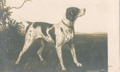 Old Sepia Postcard PC Pointer Dog Signed Ges Gesch c1907 Germany