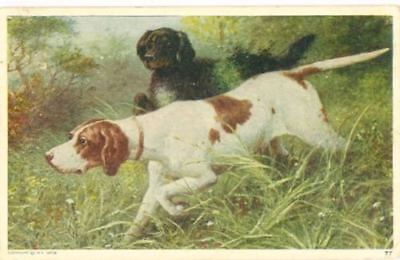 Old Art Postcard PC Gordon Setter & Pointer Hunting Dogs USA1908