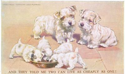Old 3 Sealyham Terrier Dog Family Valentine Mabel Gear Postcard PC England c1908