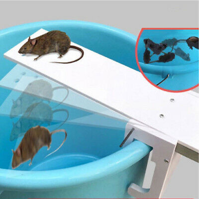 Walk The Plank Mouse Mice Rodent  seesaw Auto Reset Bait Catcher Non Poison