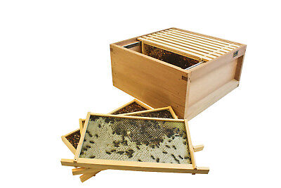 National Virtual Hive - with Frames, Photos and Brood Body Teaching Aid Free P&P