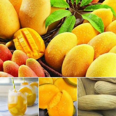 2Pcs/bag Mango Seeds Mini Mango Tree Seeds Bonsai Tree Seed Organic Fruits hot