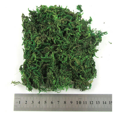 Green Dried Fake Moss Arts & Crafts Flowers Potted Plants Artificial Terrariums