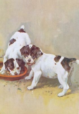 Dog Postcard PC Smooth Fox Terrier Puppies Reszke Cigarettes Ad 1930s England