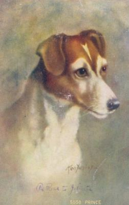 Vintage SIGNED Postcard PC Smooth Fox / Jack Russell Terrier Dog Prince c1910