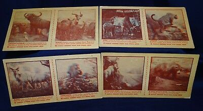 Nabisco Shredded Wheat Cereal 4 Uncut Cards Wild Animal Series 3-D 1950s Promo