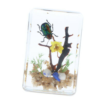 Real Insect Specimen Green Beetle with Flowers in Clear Paperweight - B