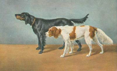 Dog Postcard PC Irish Red & White + Gordon Setter Tuck's Oilette England c1908
