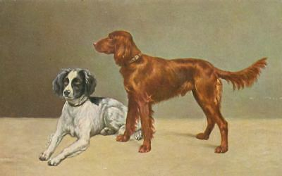 Dog Postcard PC Irish Red & White + English Setter Tuck's Oilette England c1908