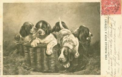 RARE Old Dog Postcard PC German Shorthaired Pointer Puppies France 1906