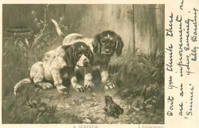 RARE Old Dog Postcard PC German Shorthaired Pointer Puppies & Frog England 1903