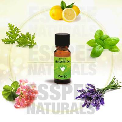 Essential Oils for Aromatherapy 10 ml - 100% Pure - Choose from Selection