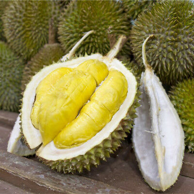 Egrow 5Pcs/Bag Durian Tree Seeds Delicious King Of Fruit Seeds High-nutrition Ra