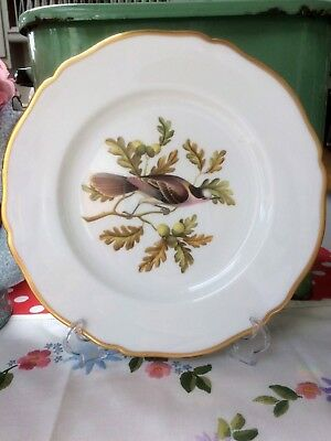 Spode Y6466 Hand Painted Bird Cabinet Plate ~ Canada Jay ~ 1st ~ VGC