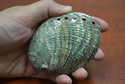 "Polished Both Sides Green Abalone Sea Shell Beach Decor 3 1/2"" - 4"" #7951"