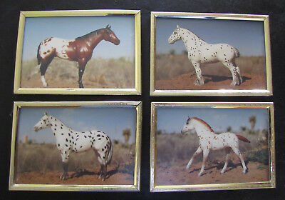 "4 APPALOOSA HORSE MODEL PHOTOS IN GOLD FRAMES 4X6"" Breyer & a repaint."