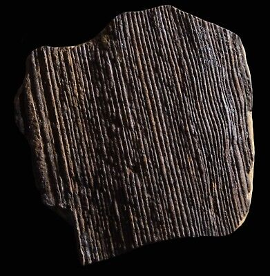 A Very Nice Calamites Wood Fossil, Mazon Creek Plant Bark Fossil