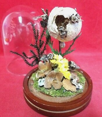 I22 Taxidermy Bumble Bees raiding a Bee hive Glass Dome Disply entomology hornet