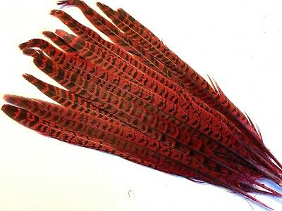 10pcs Red Pheasant Tail Feathers 24-28cm DIY Art Craft Millinery Costume Vase