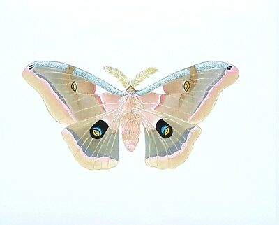 Polyphemus Moth Unmatted Print Butterfly Wall art home decoration Painting