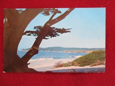 Vintage Post Card CARMEL BEACH and Coast Line Viewed through a CYPRESS Tree
