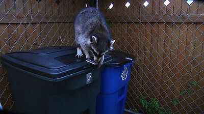 Garbage - LOC Keeps Animals Out! - For Hinged Trash Can- secure the lid Lock