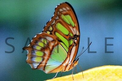 Photograph Wallpaper Digital Picture Image Desktop Background --- BUTTERFLY ---